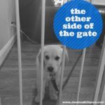 The Other Side of the Gate