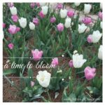 a time to bloom