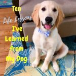 Ten Life Lessons I've Learned from My Dog