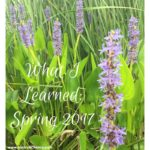 What I Learned: Spring 2017